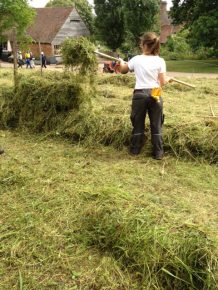 Elly adding hay to the line